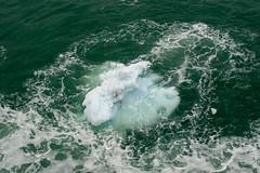MS Westerdam - 7 Day Alaska May 2018 - Glacier Bay-113.jpg (Cindy Andrie) Tags: alaska hollandamerica d800 nature britishcolumbia beach victoriabc westerdam glacierbay landscape nikon cindyandrie canada andrie glaciers nikond800 cindy