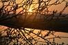 Weidenkätzchen an der Alten Treeneschleife; Süderhöft, Nordfriesland (34) (Chironius) Tags: süderhöft nordfriesland schleswigholstein deutschland germany allemagne alemania germania германия niemcy treene fluss river rivière rio поток fiume stream gegenlicht baumsilhouette rosids fabids malpighienartige malpighiales weidengewächse salicaceae weiden weide salix osier willow marsault saule sauce salice salcio ива и́ва söğüt wilg baum bäume tree trees arbre дерево árbol arbres деревья árboles albero árvore ağaç boom träd morgendämmerung sonnenaufgang morgengrauen утро morgen morning dawn sunrise matin aube mattina alba ochtend dageraad zonsopgang рассвет восходсолнца amanecer morgens dämmerung