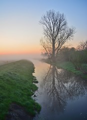Cherish your dreams and visions (Tobi_2008) Tags: sonnenaufgang sunrise baum tree flus river himmel sky spiegelung reflection natur nature landschaft landscape sachsen saxony deutschland germany allemagne germania