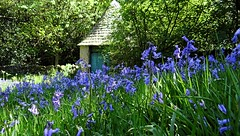 [NT] Stoneywell. The Well n Bluebells. May 2018 (Simon W. Photography) Tags: nationaltrust stoneywell stoneywellcottage ulverscroft charnwoodforest leicestershire nationaltrustuk ntmidlands ntstoneywell spring spring2018 may may2018 bluebells hyacinthoidesnonscripta nativebluebell bluebell englishbluebell britishbluebell granfergriggles cratae flora flowers flowerlove flowerporn flowering floraandfauna fauna unitedkingdom uk england english greatbritain gb britain british eastmidlands outdoor outdoors outside tree trees woodland landscape forest countryside simonhx100v sonydschx100v sonyhx100v hx100v