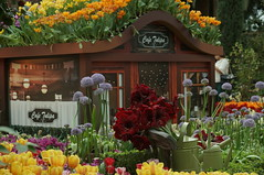 DSC07477- Gardens in the Tulips (oliveplum) Tags: tulipmania2018 flowerdome gardensbythebay leica60f28macro sony singapore flickrtravelaward marinabay display art colourful cafe