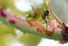 365 - Image 131 - Little spider macro... (Gary Neville) Tags: 365 365images 5th365 photoaday 2018 sonycybershotrx100v sony sonyrx100v rx100v v mk5 raynox garyneville