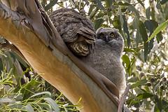 128/365  Owl