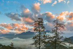 _Y2U9912-14.1116.Sả Sáng.Sa Pả.Sapa.Lào Cai (hoanglongphoto) Tags: asia asian vietnam northvietnam northwestvietnam landscape scenery vietnamlandscape vietnamscenery vietnamscene sapalandscape nature sunset twilight sky cloud tree mountain mountainouslandscape twilightinsapa sunsetinsapa flanksmountain canon canoneos1dx tâybắc làocai sapa phongcảnh hoànghôn chạngvạng hoànghônsapa thiênnhiên núi sườnnúi cây bầutrời mây hdr zeissdistagont235ze two hai 2