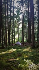 Stillwell Again (michael.veltman) Tags: north cascades backpacking trail loop national park little big beaver