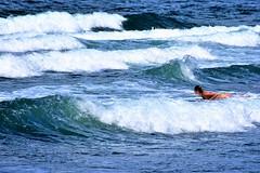 Waves rolling in (thomasgorman1) Tags: waves beach surf surfing nikon island hawaii honolii hamakua coast shore surfer woman watersports bikini wave nature sea ocean