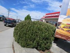 IMG_9150 (Andy E. Nystrom) Tags: vernon bc britishcolumbia vernonbritishcolumbia burger kingfast food restaurant