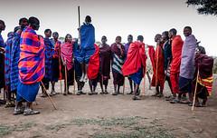 Traditional massai dance (mdmove1962) Tags: africa afrika brauch erwachsener gesellschaft kultur move1962 move1962gmxnet mensch menschen michad ngorongoroconservationarea reisefotografie tradition volkstanz african afrikanisch cultural culture kulturell travelphotography arusharegion tansania tz massai heritage tanzania dance tanz
