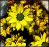 Cores da natureza. #flores #flowers #borboletas #naturalbeauty #natureza #naturephotography #jardim #floreslindas #revistaxapury #eunotg #criacaodedeus #obradivina #instaflowers #instaflores #motox2 #instamotox2 #garden #floricultura #intagram #instalike (ederrabello2014) Tags: floricultura instamotox2 motox2 borboletas naturephotography instalike brwildanimals3anos flowersofinstagram naturalbeauty eunotg natureza obradivina butterflyshow jardim instaflores flowers floreslindas flores revistaxapury flowerstagram flowersbouquet intagram criacaodedeus flordopapai brwildanimals flowerslovers instaflowers intagrambrasil garden