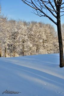Spring Snowfall_10_DSC_1477_WM