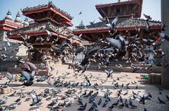 Durbar square, Kathmandu (rfabregat) Tags: durbar square durbarsquare pidgeons nepal nepalese asia kathmandu travel travelphotography street streetphotography