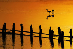 Orange quietness (Tati@) Tags: orange tramonto riflesso minimal fenicottero sunset water flamingo pond stagno molentargius silhouettes black reflection