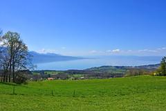 Panorama lémanique (Diegojack) Tags: chardonne vaud suisse paysages d7200 mai léman campagne montpélerin printemps groupenuagesetciel
