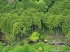(takafumionodera) Tags: em1 forest mishima mishimaskywalk olympus omd park shizuoka tree 三島 三島スカイウォーク 公園 木 森 静岡