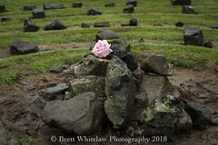 _DSC5957 (brett.whitelaw) Tags: rose labyrinth stone rock mud hills mountains green dream dreamscape bokeh fairyglen isleofskye scotland uk europe eurotrip trip travel travelgram instatravel picoftheday photooftheday pink