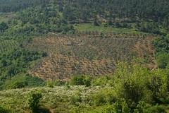 ortaköy-üreğil doğa yürüyüşü