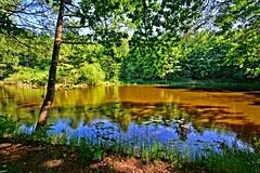 Take a walk.... (Tobi_2008) Tags: teich pond wald forest bäume trees landschaft landscape natur nature sachsen saxony deutschland germany allemagne germania