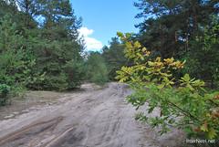 Волинський ліс Лісова дорога InterNetri Ukraine 1312392033