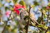 Tweet, Tweet! (Geraint Rowland Photography) Tags: nature wildlife birds birdsinlima canon5divandasigmaart135mm wwwgeraintrowlandcouk tree flowers colours printsforsale photographylessonsinlima miraflores lima peru geraintrowlandphotography bird