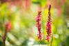 Grazien (madtacker) Tags: pflanze blume outdoor natur makro detail vintage art bokeh ennamünchen ennalyt f19 50mm nikon d800 deutschland germany