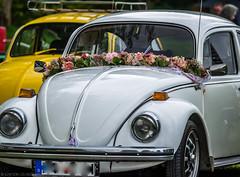 Flower Girl (katrin glaesmann) Tags: maikäfertreffen volkswagen käfer beetle classiccar oldtimer messegelände laatzen hannover wheels hoods colours headlamp headlight flowergarland bridaltransportation wedding