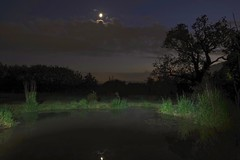 Moon Pool (Deepgreen2009) Tags: moon pool pond cloud night light reflection garden still