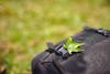 背包上的綠 (M.K. Design) Tags: mkdesign green leaf grass nature nikon sigma 50mm f14 art bokeh scenery backpack primelens life mk攝記 綠 葉子 草地 尼康 自然 淺景深 散景 適馬 定焦鏡 標準焦段 大光圈 生活