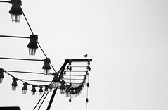 Vigilante (Lograi) Tags: barcelona cataluña catalunya catalonia españa espanya spain geoetiquetada geotagged streetlight seagull gaviota lámpara farola bw blancoynegro byn blackandwhite blackwhite bn