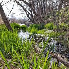 Un racó de pau i solitud ... (Miquel Lleixà Mora [NotPRO]) Tags: verd green landscape paisatge riu river aigua water