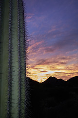 Sonoran sunset 2 (Explored April 18) (another_scotsman) Tags: sonoran desert sunset landscape saguaro cactus