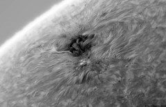 AR12706 (Ha) - 20/04/18 (alastair.woodward) Tags: solar sun active region ar12706 mono colour white light false sunspot sunspots plage filament hydrogen alpha ha astronomy astrophotography stars space universe day sky skywatcher 120mm achromat refractor quark monochrome pointgrey blackfly cmos