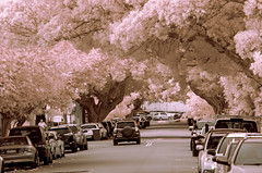 Turning Japanese? (OzzRod (on the road again)) Tags: pentax k5 smcpentaxk200mmf4 infrared hoya r72 720nm falsecolour trees avenue street newcastle singleinmay2018