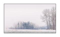 Winternachmittag (ernst.koeppel) Tags: bäume trees winter reif raureif frost kalt cold white fog nebel mist bayern bavaria frankonia oberfranken