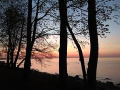 Alexandria. Pink sunset. (presteza777) Tags: petergof peterhof alexandria thegulfoffinland coast sea sunset sky clouds nuvole tramonto trees russia puestadelsol coucherdusoleil