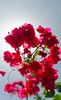DSC_0111.jpg (martin.fotografia) Tags: flower sigma1750 nikon nature d5100
