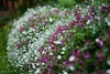 ~~ Bordure ~~ (Joélisa) Tags: macro mai2018 fleurs pluie gouttelettes nikon