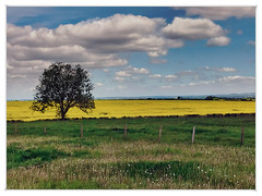 lincolnshire wolds (Mallybee) Tags: lincolnshire wolds iphone7 mallybee landscape