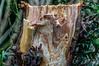 The broken trunk (Marco van Beek) Tags: holland europe beautiful world nikon d5000 afs dx nikkor 18200mm f3556g ed vr ii trunk wood forest conifer nature