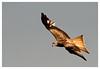 _LUN4714-1 (josemiguellunaromero) Tags: animales naturaleza