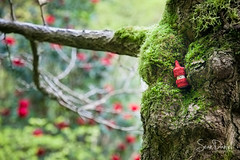 Red Little Man (Sean Daniel) Tags: royal vancouverisland bc canada canon find flowers hike hiking little man markii moss park roads surprise trees university victoria yyj