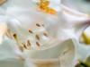 """inside"" (tuvidaloca) Tags: rododendros studie blossom 21mmextensiontube macro primerplano nahaufnahme white inflorescence desenfoqueparcial weis 21mmanillodistanciador flower closeup flor floración rhododendron rododendro makro garden shrub vistadecerca heyday blütezeit inflorescencia infloreszenz dof bokeh estudio busch garten blüte bokehextreme 21mmdistanzring blanco study desenfoque jardín"