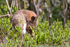 ©Mark Kras-Konijn-_DWL2939.jpg (markkras-fotografie) Tags: zoogdieren konijn fauna europeanrabbit oryctolaguscuniculus nederland nl