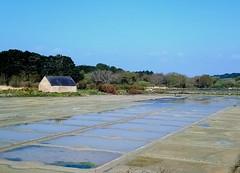 Marais salant de Kervillen à la Trinité-sur-mer (Bretagne, Morbihan, France) (bobroy20) Tags: kervillen latrinitésurmer saintphilibert marais maraissalant maraissalantdekervillen bretagne morbihan sel france carnac