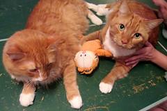 20170806 1327 - yardsale haul - cats & Garfield - IMG_2765