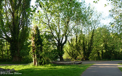 May 8th, 2018 On my way to the train station and Oxford (karenblakeman) Tags: hillsmeadow caversham uk thames footpath trees 2018 2018pad may reading berkshire