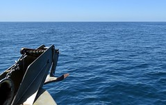 Whale Watching! (Bennilover) Tags: pacific whalewatching boats dolphins whales bluewhale largest animal captain exciting waves southerncalifornia bottlenosedolphin explore