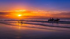 Fun in the sun (jenni 101) Tags: ausrtralia australianbeach greatoceanroad nikond7200 sigmaart18 victoria colourful horses photographybyjen seascape sunrise torquay trainginghorses