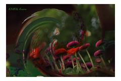 La ola (mariadoloresacero) Tags: montage montaje forest forêt bosque nature naturaleza fiore fleurs flowers flores canoneos550d