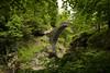 38 shades of green @ Ponte Romano . Intragna, Centovalli (Toni_V) Tags: m2407790 rangefinder digitalrangefinder messsucher leicam leica mp typ240 type240 28mm elmaritm12828asph hiking wanderung randonnée escursione camedointragna ponteromano bridge brücke ponte centovalli tessin ticino switzerland schweiz suisse svizzera svizra europe frühling spring green ©toniv 2018 181210