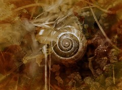 Shell .. (Julie Greg) Tags: shell nature texture colours canon5dmarkiv grass snail